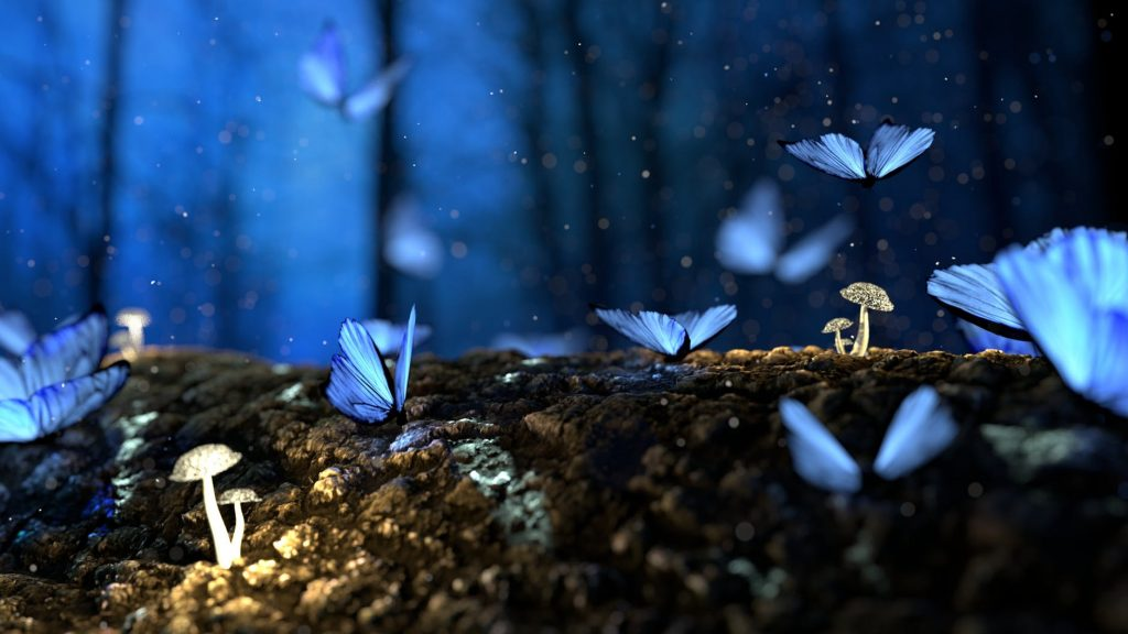 butterflies in a magical forest